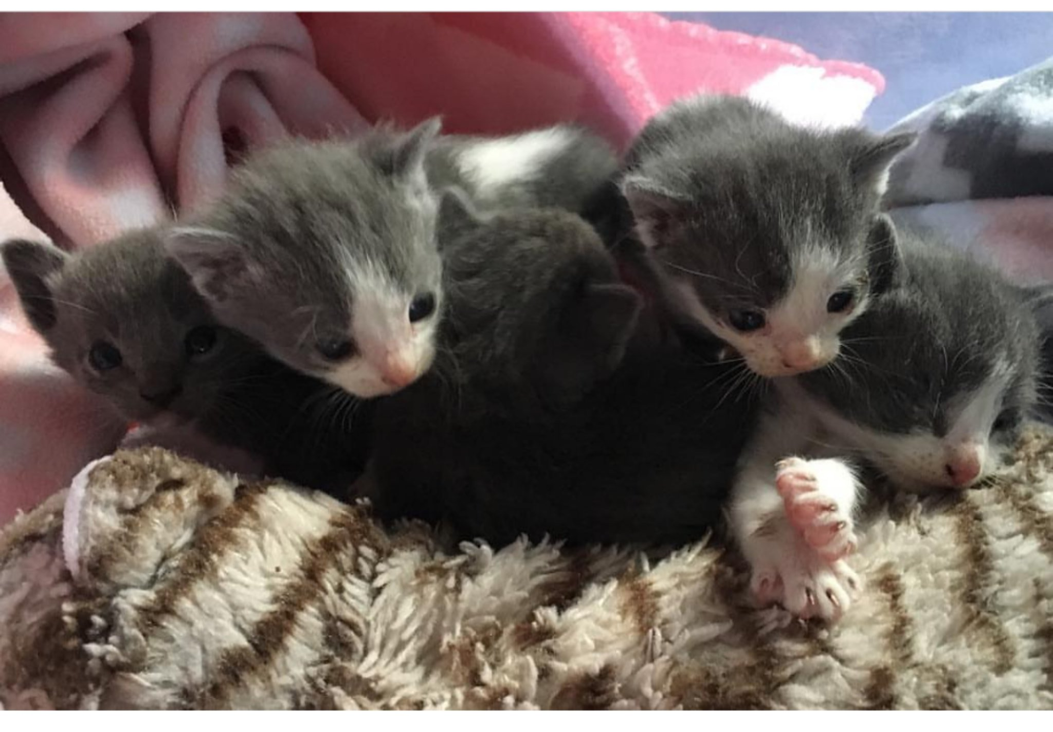 Caring For Bottle Babies Cat S Cradle